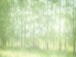 Twenty One Trees, Photographer Brian Goodman © 2017