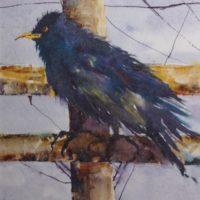Wild Crow © 2107, JoAnn Raines, www.discoverporttownsend.com